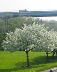 HiddenValley Spring