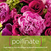 LIVE LIKE A FLOWER: Pollinate