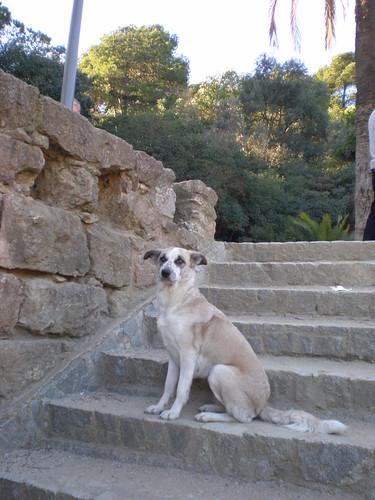 スペインの犬さん_1972238