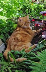 Mütz in the garden
