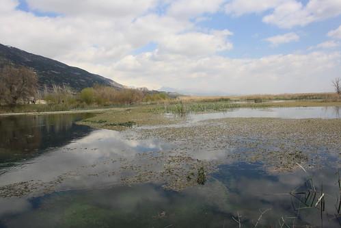 lebanon swamp wetland liban bekaa eastlebanon aamiqregion