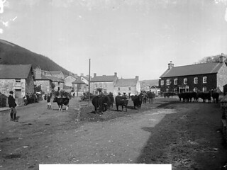 Cattle fair, Tal-y-bont (Ceredigion)
