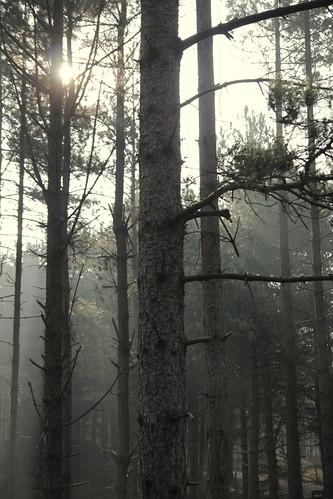 Moment magique dans la forêt de pins