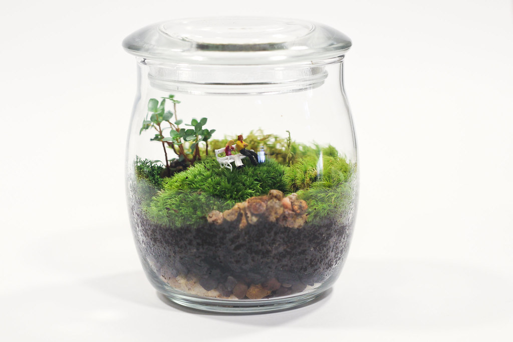 Bark Bench Terrarium