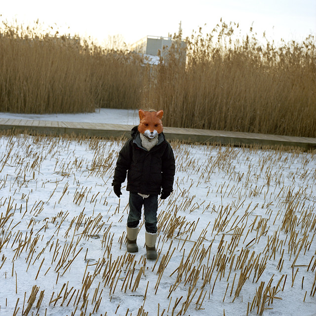Fox in the Snow, Where do you Go...?