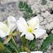 Badlands National Park, Spring