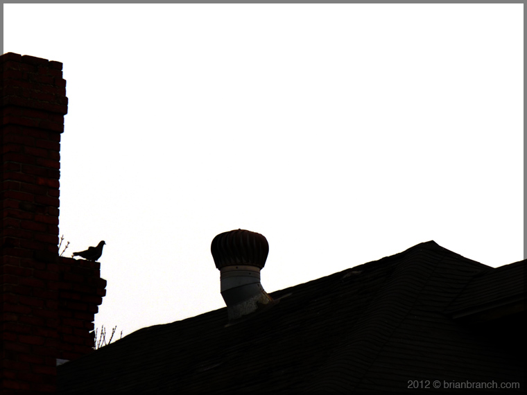 P1250213_pigeon_rooftop