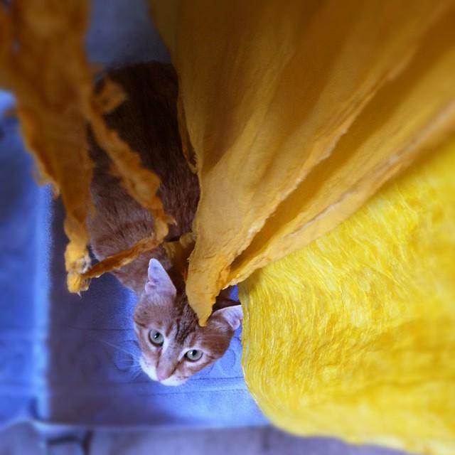 hiding under the sunny scarves