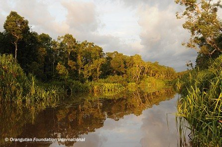 Tanjung Puting National Park Is One Of The Natural Wonders Of The World The Travel Junkie