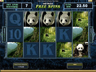 Untamed Giant Panda Bonus Feature