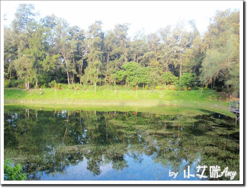 台東黑森林琵琶湖P7242414