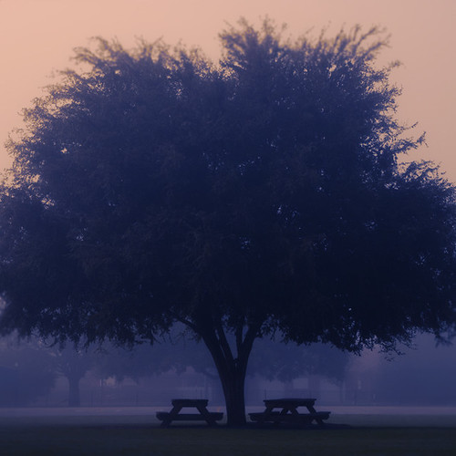 Mist Tree by 2chanze