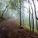 Small photo of Sendero bajo la niebla