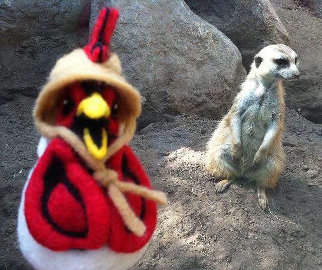 Felted Chicken Head - Zoo - Meerkat