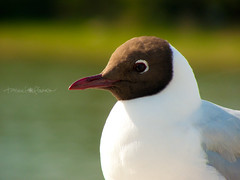 animal, fauna, close-up, gull, beak, bird, seabird, wildlife,