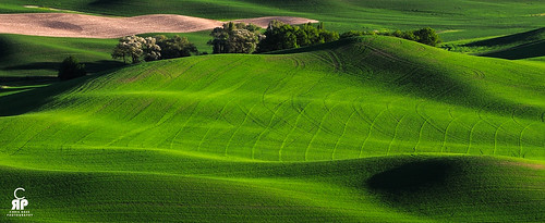 Palouse Greens