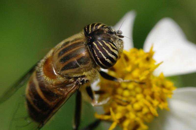 以下看到的...通通不是蜜蜂
