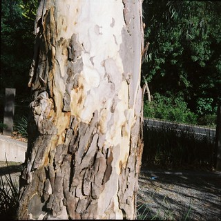 Bark on tree