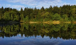 Waldsee Reflections