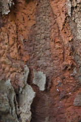 Árvore (4)