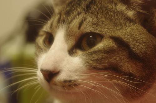 雨の日に来た迷い猫「足袋」3
