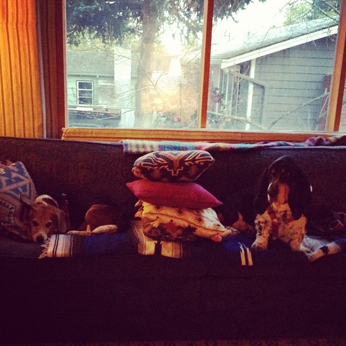 Iron cushions