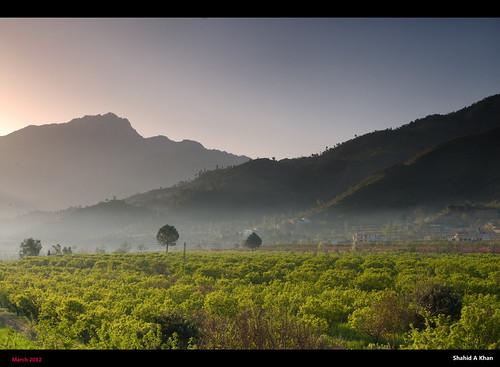 pakistan sunrise landscape photography flickr forsale shot image picture pic images nwfp swat orchards northwestfrontier nikon18200vr barikot nikond300 sakhan shahidakhan sunriseatorchard sakhanphotography