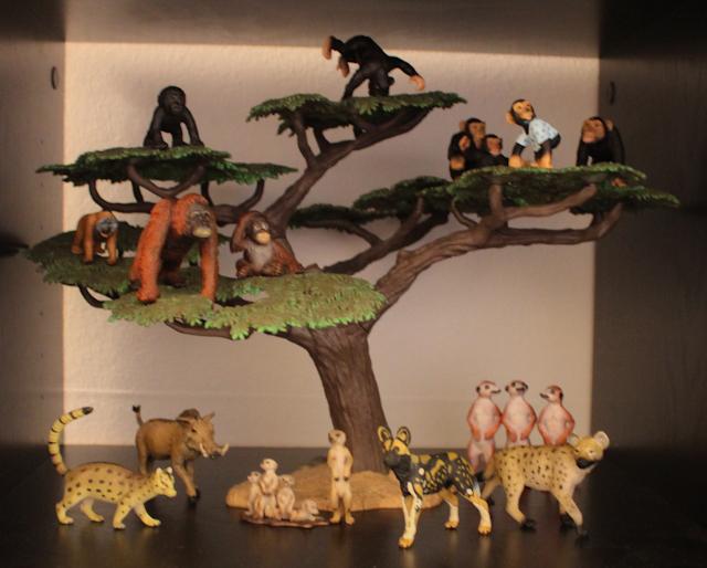I got an acacia tree! 7000576697_a3a5255a2a_o