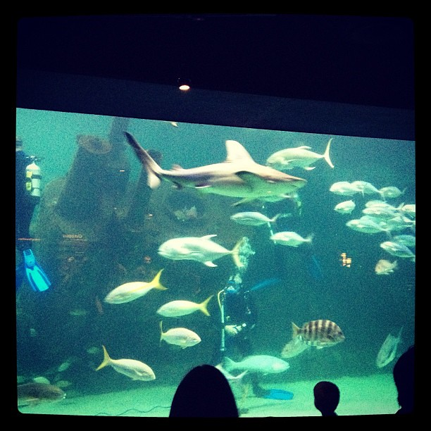 Watching some divers in the shipwreck tank with sharks. =)