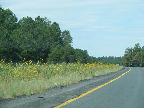 Road And Sunflowers