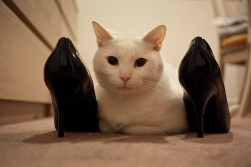 Snowflake's shoes
