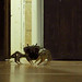 The great escape... crab casually running from the kitchen :). 03MAY12