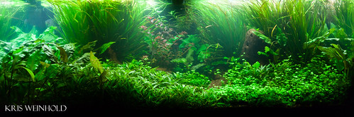 75G Aquascape