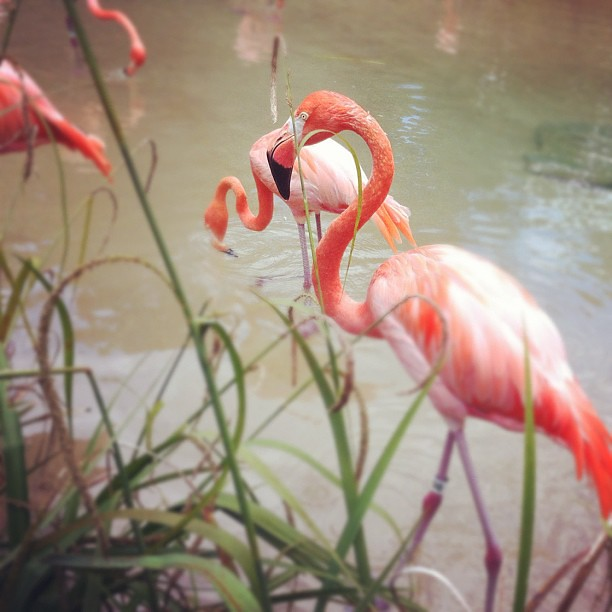 Hello flamingo.