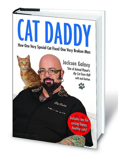 cat-daddy-3d