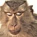 Con Khỉ Bị Thương by Sinhdoi - Đi Minsk-khơ chụp ảnh !