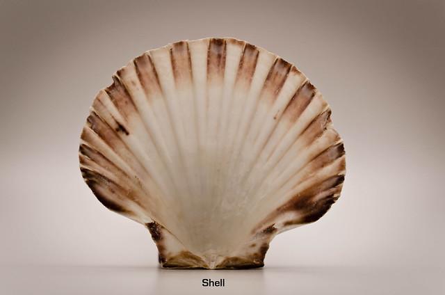 218/366: Shell