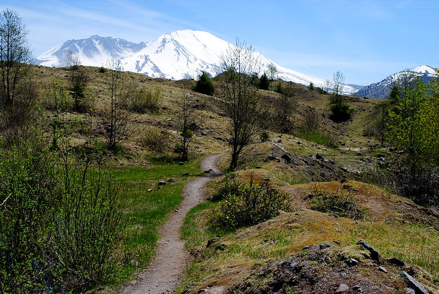 on the Hummocks Trail #229 - Mt St Helens