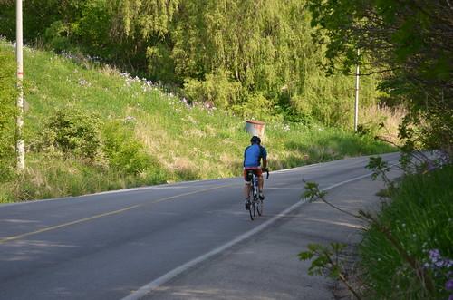 Halfway up Brimley Road