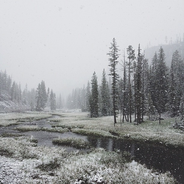 Yellowstone receives some May snow
