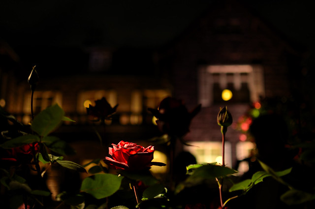 a rose and the European-style building