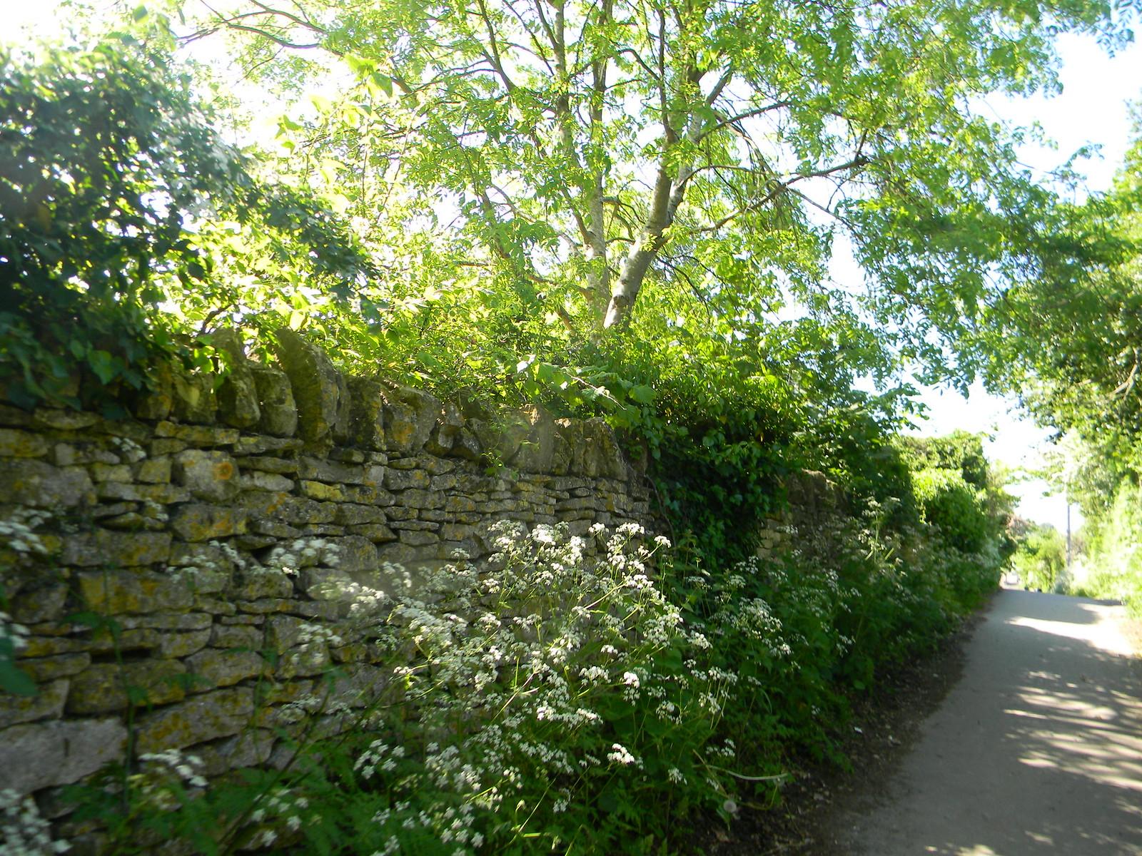 Leafy wall Moreton-in-Marsh Circular