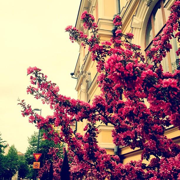 #tree #flowers #seems_pretty_royal