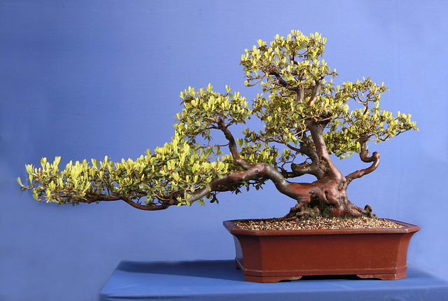 Wee Trees Bonsai Help Forum Advice For All View Topic Photo Session