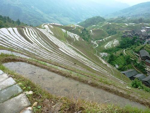 C-Guangxi-Pingan-Terrasse des 9 dragons (20)