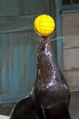Seal's control