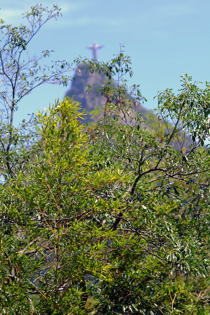 Cristo Redentor through the trees