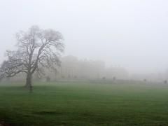 48 - Fog