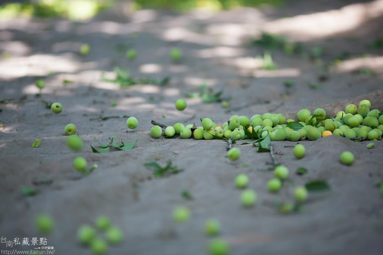 台南私藏景點--南化採梅 (14)