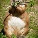 Präriehund / Prairie Dog by R.O. - Fotografie